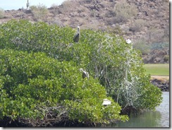 Loreto Bay Golf gallery Loreto Mexico RBuchanan photo