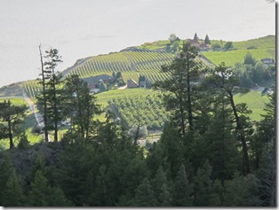 RBuchanan vineyards in my view IMG_8166